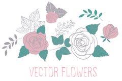 Rosas del vector Fotografía de archivo libre de regalías
