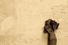 Rosas del vintage con los fondos de la pared de ladrillo Fotos de archivo