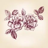 Rosas desenhadas mão Foto de Stock