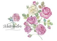 Rosas desenhadas mão Fotografia de Stock Royalty Free