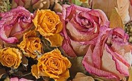 Rosas desvanecidas Foto de Stock Royalty Free