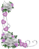 Rosas do branco da beira do convite do casamento Fotos de Stock Royalty Free