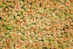 Rosas do casamento fotos de stock royalty free
