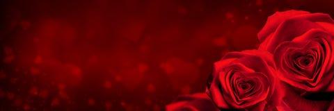Rosas do dia de Valentim fotos de stock royalty free