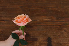 Rosas do fundo de Brown fotografia de stock royalty free