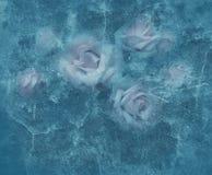 Rosas do gelo fotos de stock