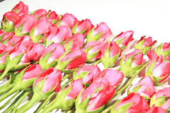 Rosas do romance Fotos de Stock