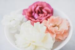 Rosas do vintage no mármore fotografia de stock royalty free