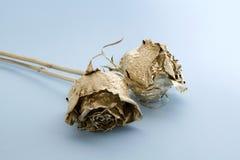 Rosas douradas Fotografia de Stock Royalty Free