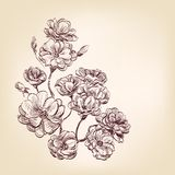 Rosas drenadas mano Foto de archivo libre de regalías