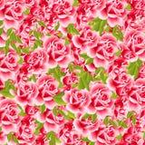 Rosas dulces Fotos de archivo