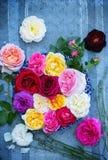 Rosas e alfazema inglesas fotos de stock