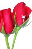 Rosas e anel vermelhos Fotografia de Stock Royalty Free