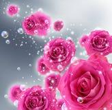 Rosas e bolhas Imagens de Stock Royalty Free