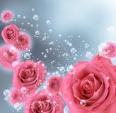 Rosas e bolhas Fotos de Stock