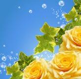 Rosas e bolhas Fotografia de Stock