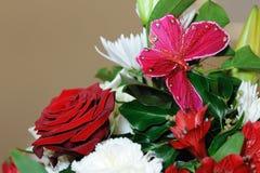 Rosas e borboleta vermelhas. Imagens de Stock Royalty Free