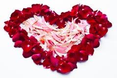 Rosas e corações. Imagens de Stock Royalty Free