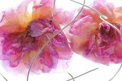 Rosas e fio congelados Fotografia de Stock Royalty Free