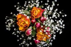 Rosas e Gypsophila dos botões Fotografia de Stock Royalty Free