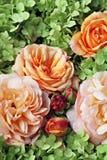 Rosas e hortensia. Fotos de Stock