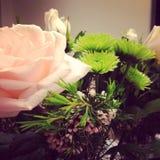Rosas e mums Fotos de Stock