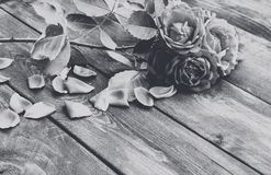 Rosas e pétalas em uma placa de madeira velha Foto branca preta Flores?a o frame imagem de stock royalty free
