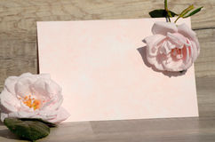 Rosas e papel Fotos de Stock Royalty Free