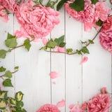 Rosas e ramos cor-de-rosa românticos da hera no fundo de madeira branco imagem de stock royalty free