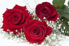 Rosas e romance fotografia de stock royalty free