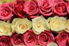 Rosas em máscaras diferentes do arranjo cor-de-rosa, nupcial Imagem de Stock Royalty Free
