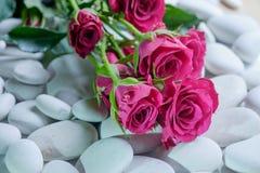 Rosas em seixos Imagem de Stock Royalty Free