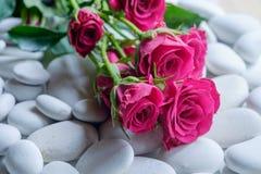 Rosas em seixos Imagens de Stock