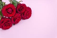 Rosas em um fundo cor-de-rosa, um ramalhete de rosas vermelhas O dia de Valentim, o dia de mãe feliz Dia feliz do ` s das mulhere fotografia de stock