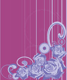 Rosas em um fundo violeta em uma tira Foto de Stock
