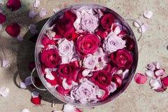 Rosas em uma bacia Foto de Stock Royalty Free