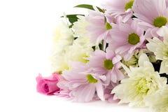 Rosas en colores pastel Foto de archivo