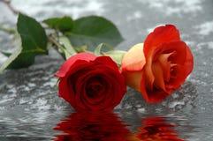 Rosas en el agua Foto de archivo
