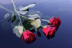 Rosas en el agua Imagen de archivo libre de regalías