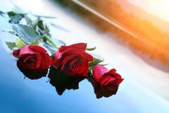 Rosas en el agua Imagenes de archivo