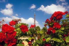 Rosas en el Champ de Mars Foto de archivo libre de regalías
