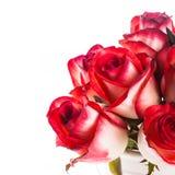 Rosas en el cubo fotos de archivo