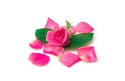 Rosas en el fondo blanco Fotos de archivo