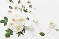 Rosas en el fondo blanco Fotografía de archivo libre de regalías