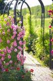 Rosas en el jardín Imagen de archivo libre de regalías