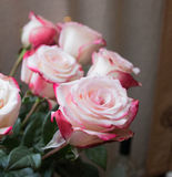 Rosas en estilo del vintage Foto de archivo libre de regalías