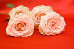 Rosas en fondo rojo Imagenes de archivo