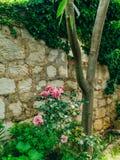 Rosas en la calle Las rosas rosadas y rojas crecen en las calles de M Fotografía de archivo