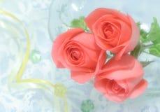 Rosas en la gasa imágenes de archivo libres de regalías