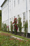 Rosas en la pared Foto de archivo libre de regalías